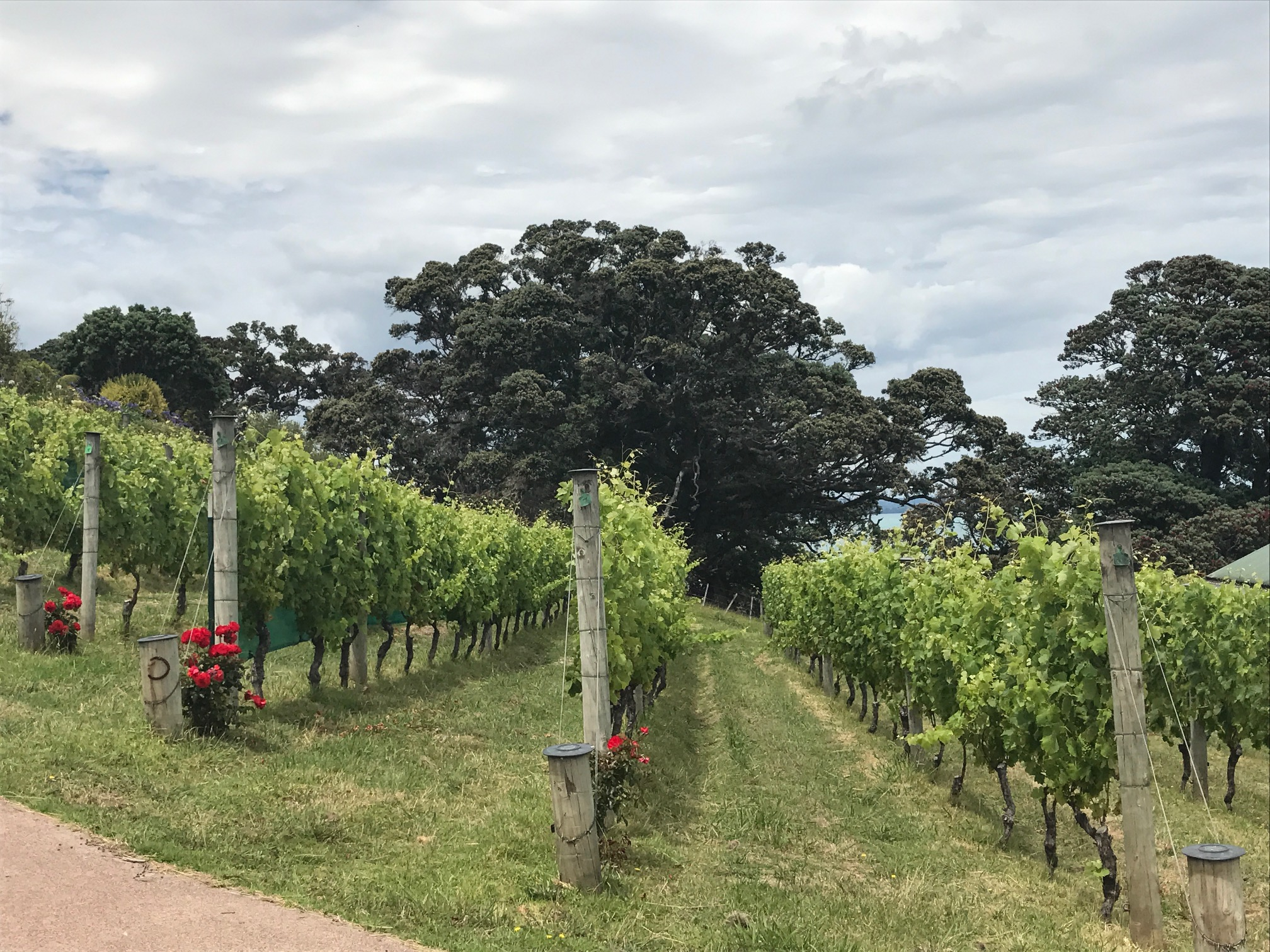 Kennedy's Point Vineyard on Waiheke Island