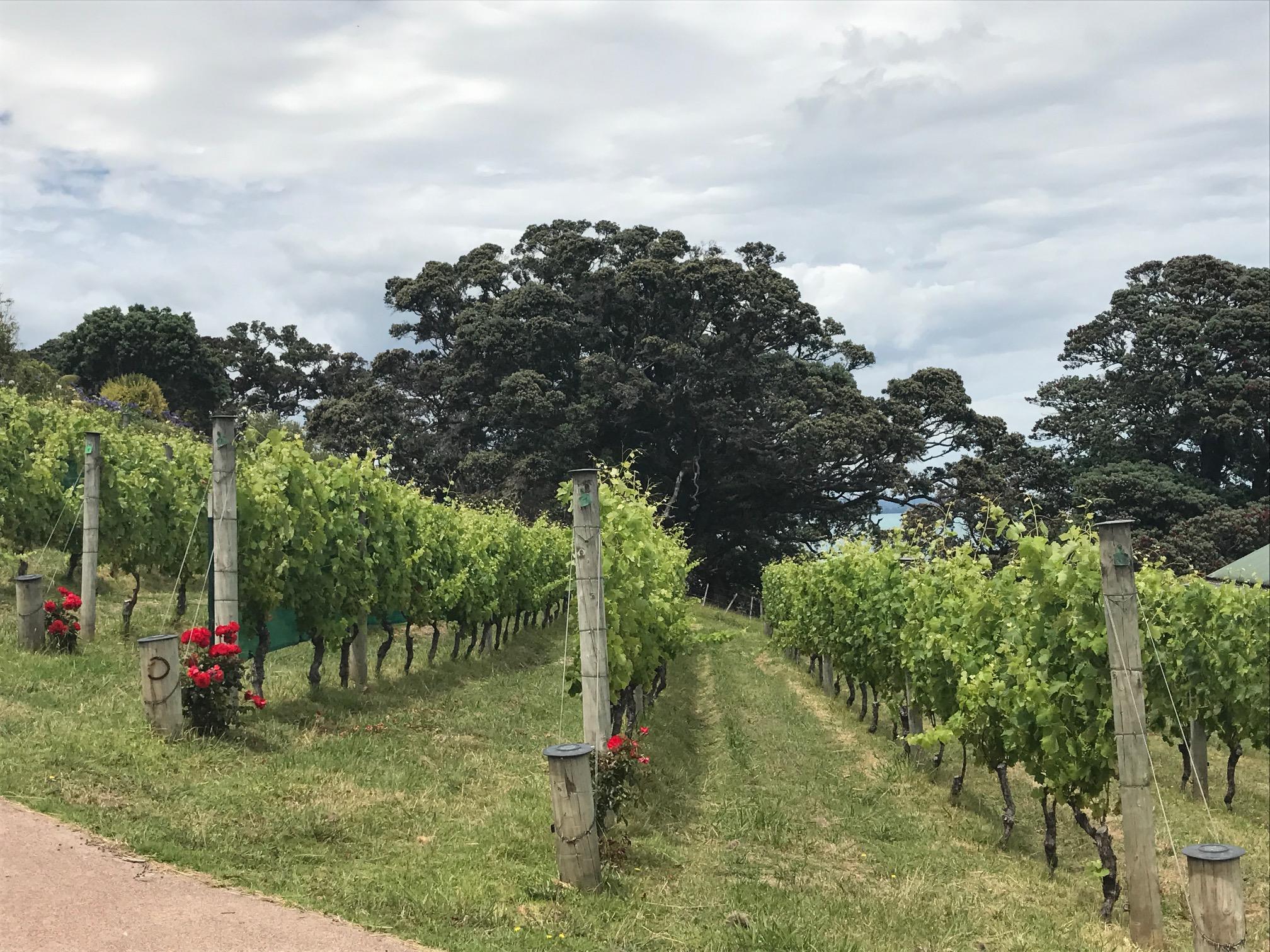 Kennedy's Point Vineyard on Waiheke Island