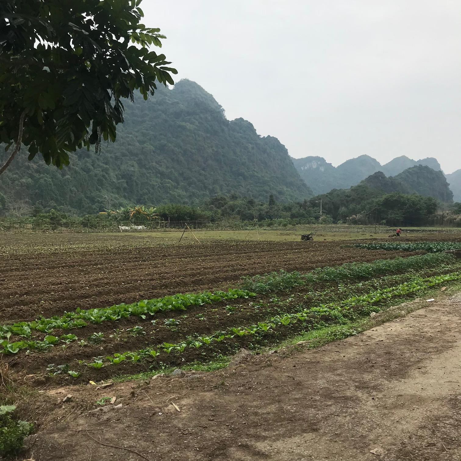 Farm on Cat Ba Island Halong Bay